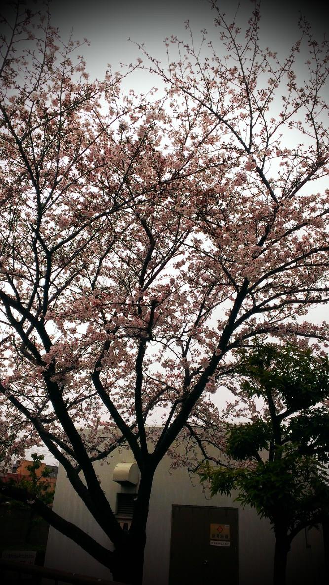 春はすぐそばに。